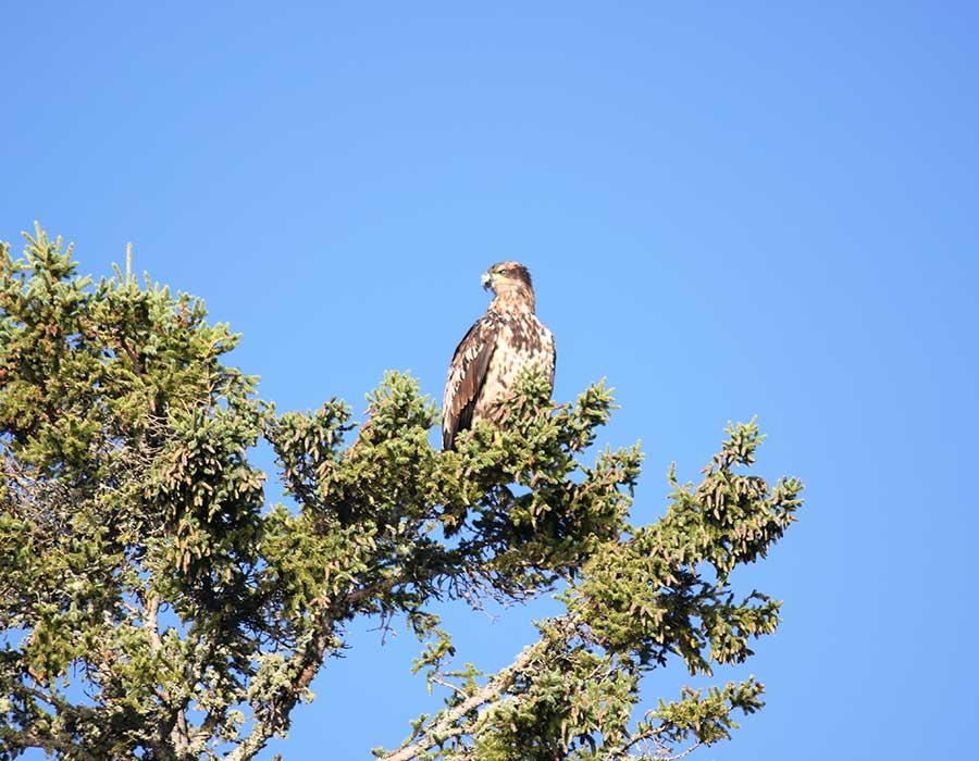 bird-watching-feature