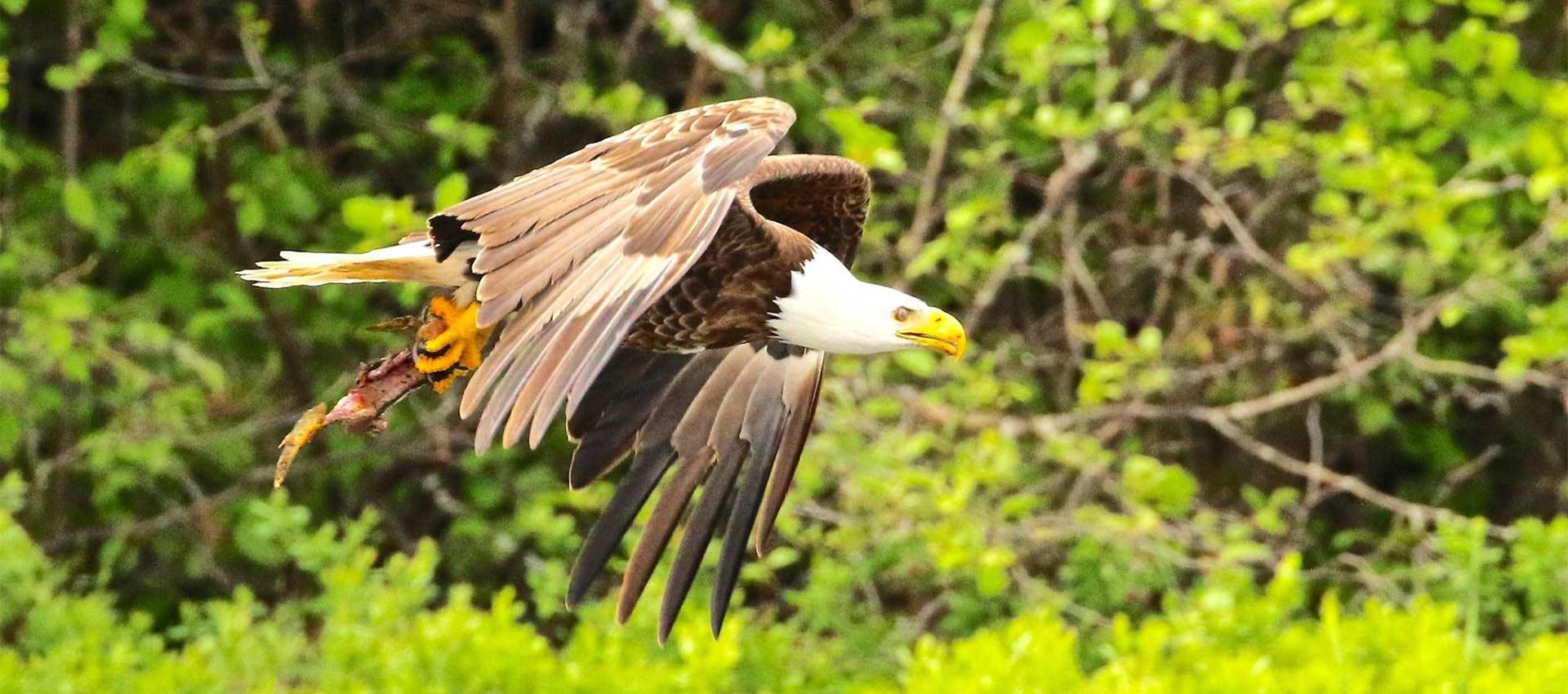 bird-watching-header-2