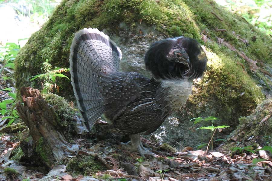 bird-watching-photo3