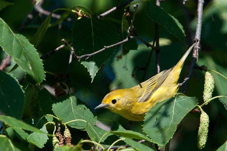 bird-watching-photo4