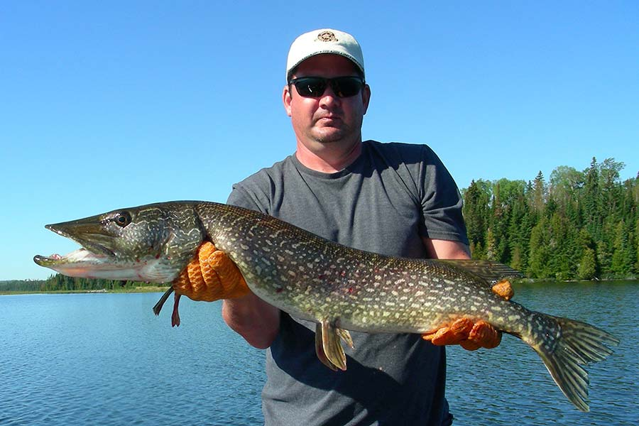 northern-pike-fishing-gear